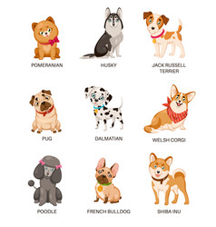 Cute puppies funny dogs different breeds vector