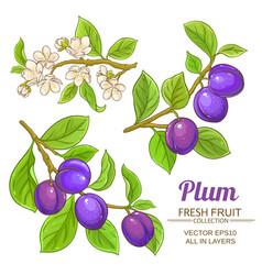 Plum branches set vector