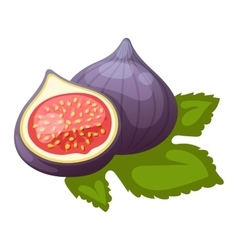 Figs fruits vector image vector image