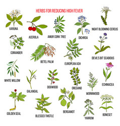 Best herbs for reducing high fever vector