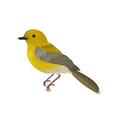 Detailed icon of yellow warbler small song vector