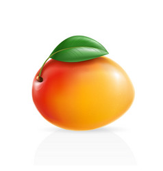 Realistic mango vector
