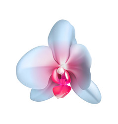 colored exotic orchid realistic isolated vector image