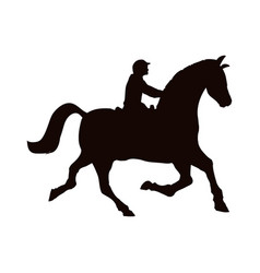 horse riding equestrian sport vector image