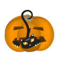 pumpkin scares cat vector image