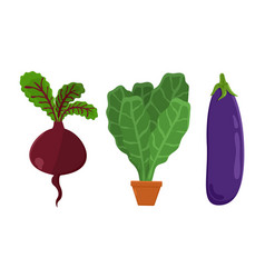 vegetarian food set beetroot vector image