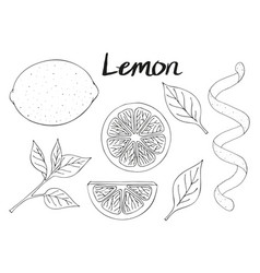 Collection of hand drawn elements lemon leaves vector