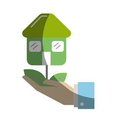 green house plant with leaves in the hand vector image