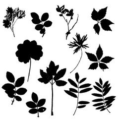 Set of plants and leaves silhouettes vector
