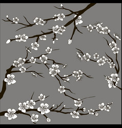 Set of sakura japan cherry vector