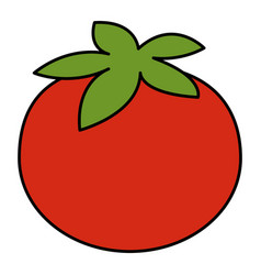 tomato fresh vegetable icon vector image