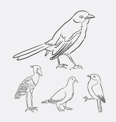 bird poultry animal hand drawing style vector image vector image