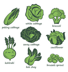 cabbage images set vector image