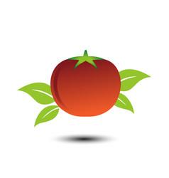 tomato image design template vector image