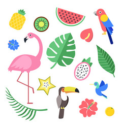 flowers and tropical exotic fruits and birds vector image