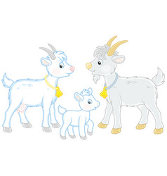 goat kid and he-goat vector image