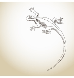 Lizard Hand drawn vector image