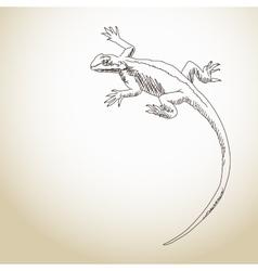 Lizard Hand drawn vector