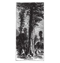 Big trees of california vintage vector