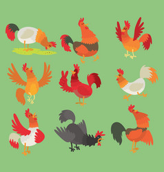 Rooster cock chicken cartoon character vector