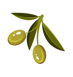 Small sprig with green leaves and two ripe olives vector