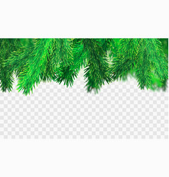 stock christmas tree branches vector image