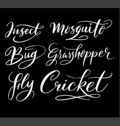 insect and bug hand written typography vector image vector image