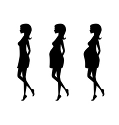 Silhouette of pregnant woman in three trimesters vector image vector image