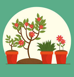 Beautiful flowers and plants cultivated in pot vector