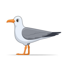 laridae bird on a white background vector image