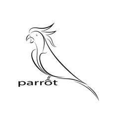 parrot line drawing vector image