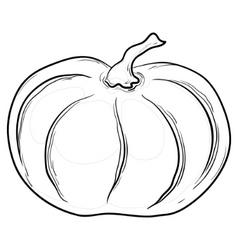 pumpkin contours vector image vector image