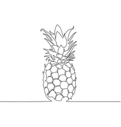 continuous line pineapple tropical flora vector image