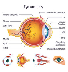 eyeball medical anatomy icons set cartoon style vector image