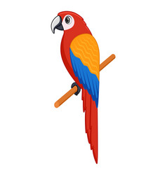 macaw bird on a white background vector image
