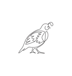 one single line drawing funny valley quail vector image