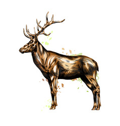 red deer from a splash watercolor colored vector image