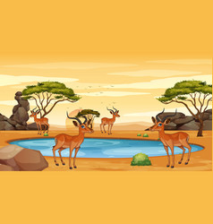 Scene with gazelle in field vector