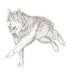 wolf running sketch icon vector image