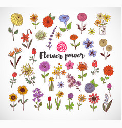 colored doodle sketch flowers on white background vector image vector image
