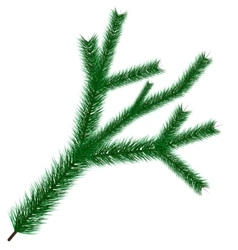 christmas tree branche vector image