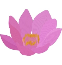 lotus pink flower icon vector image vector image