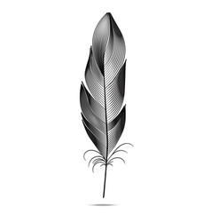 black and white feathers on a white background vector image vector image