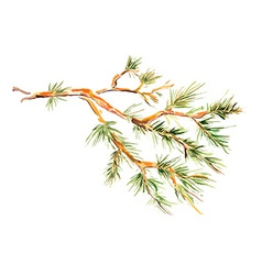 Watercolor painting - pine branch vector