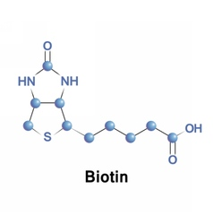 Biotin is a vitamin B7 vector