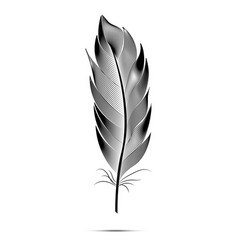black and white big fluffy feather vector image