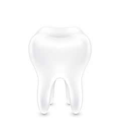 Clean healthy tooth vector image