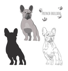 dog silhouette and hand drawn sketch of purebred vector image