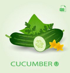 fresh cucumbers with leaves and flowers isolated vector image