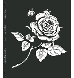 Hand sketched white rose in engraving style vector image